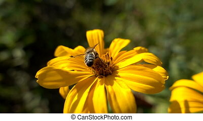 Bees pollinate a flower.