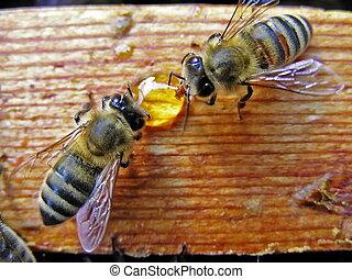 Bees take away the drop of honey. - Bees take away the honey...
