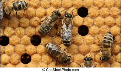 Bees take care of larvae - their future generation.