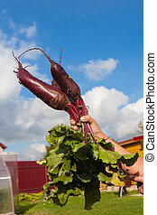 beet against the sky
