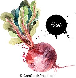 Beet. Hand drawn watercolor painting on white background....