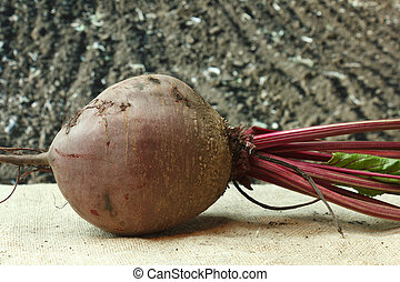 beet on the background of agricultural lands