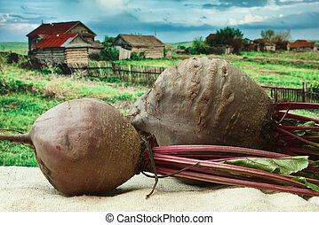 beet on the background of rural areas