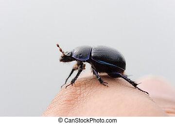 beetle close up