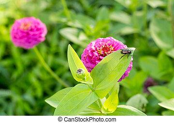 beetle eating leaf purple flower 2