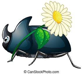 Beetle holding flower on white background