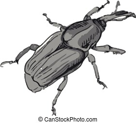 Beetle - Illustration of beetle insect vector