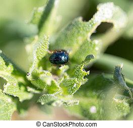 beetle in nature. macro
