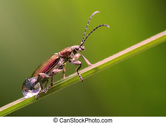 Beetle on a branch with drops