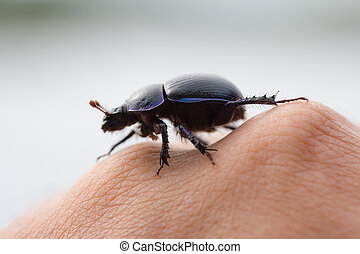 beetle on a hand