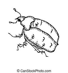 Beetle on a white background. Vector illustration
