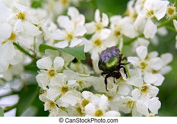 Beetle on flowers