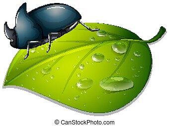 Beetle on green leaf on white background
