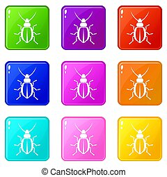 Beetle set 9