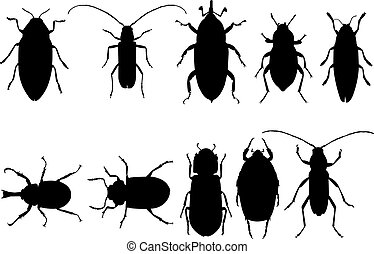 Beetle Silhouette vector illustration