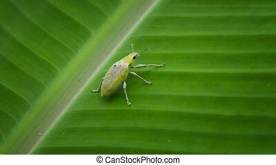 Beetle sits on a plant in the rainforest