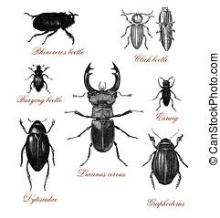 beetles, old print - Vintage illustration table with...