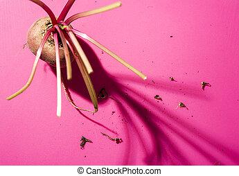 Beetroot abstract still life