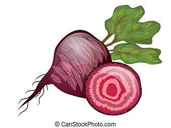 beetroot isolated on a hite background. 10 EPS