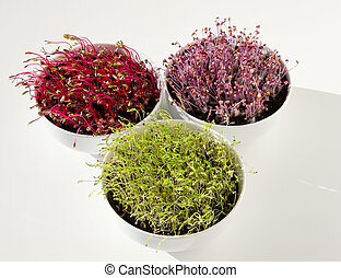Beetroot, red cabbage, carrot microgreens in bowls from ...