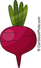 Beetroot vegetable isolated on white background. Vector illustration.