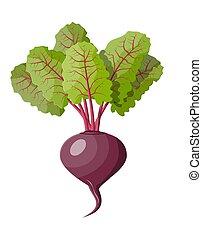 Beetroot with top leaves. Beet vegetable.