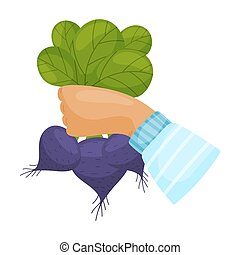 Beets with leaves in the hand. Vector illustration on a white background.