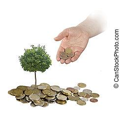 befektetés, fordíts, mezőgazdaság