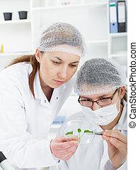 befog, közül, tudósok, alatt, egy, laboratórium, munka on, kémiai, testing.