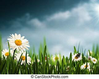 Before the rain. Natural backgrounds with beauty daisy flowers