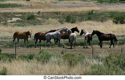 begegnungen, pferdeartig
