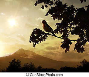 Begining of a new day - Singing bird on a branch against the...