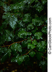Beginning of autumn. Wet leaves, rain. Background