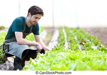 beglaubigen, junger, kultur, attraktive, landwirt, ...