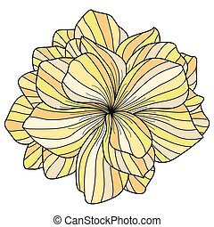 begonia, witte bloem, achtergrond, gele