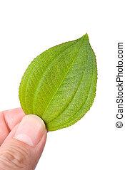 begrepp, av, eco-friendly, färsk, blad, in, hand.