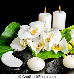 begrepp, blomma, phalaenopsis, dagg, blad, kurort, candl, orkidé