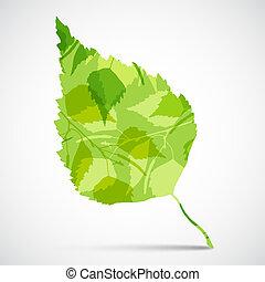 begriff, grüner hintergrund, leaf., birke