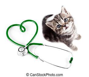 begriff, veterinär, haustiere