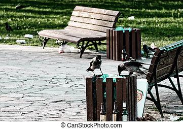 behälter, bild, essende, muell, unordung, krähen, park., herde, abfall, öffentlichkeit