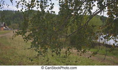 Behind leaved birch branch through country road stand wooden...