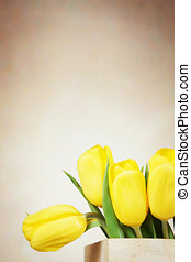 Beige background with vibrant yellow tulip flowers