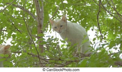 beige cat sitting on a branch of slow motion video