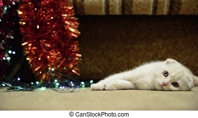 Beige kitten lies about Christmas lights and tinsel - Beige...