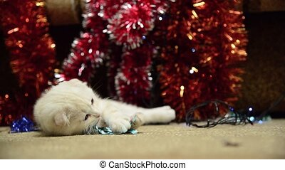 Beige kitten playing with Christmas tinsel - Beige kitten...