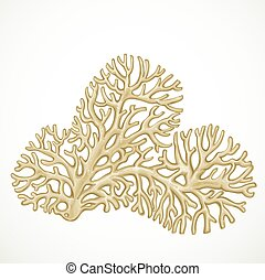Beige or white corals sea life object isolated
