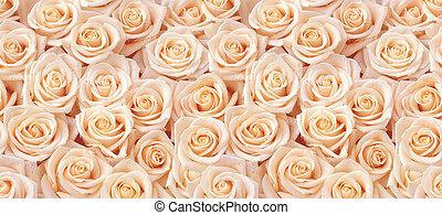 beige, rosas, seamless, patrón