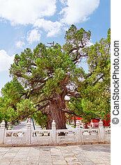 beijing, árbol viejo, confucius, confuciano, -, segundo, más...