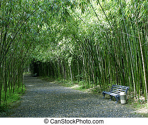 being single bench in a bamboo grove