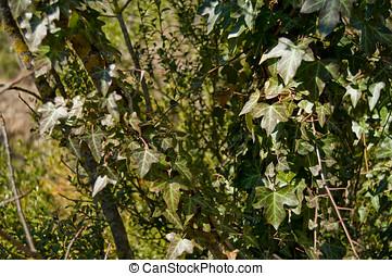 beklimming, plant, in, een, boompje